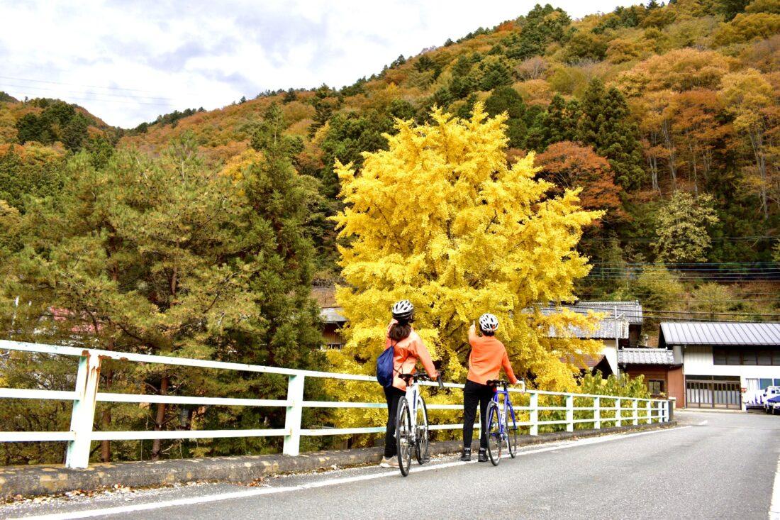 Fall Cycling Route in Uenomura: Bridge